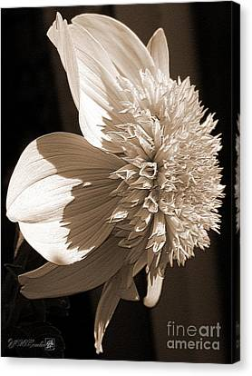 Dahlia Named Platinum Blonde Canvas Print by J McCombie