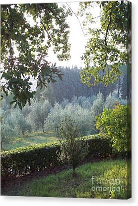 Dawn In Loppiano Canvas Print
