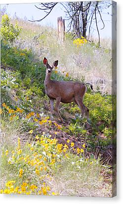Canvas Print featuring the photograph Deer In Wildflowers by Athena Mckinzie