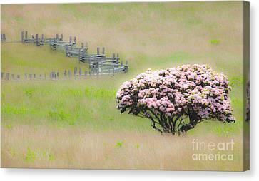 Delicate Meadow - A Tranquil Moments Landscape Canvas Print by Dan Carmichael
