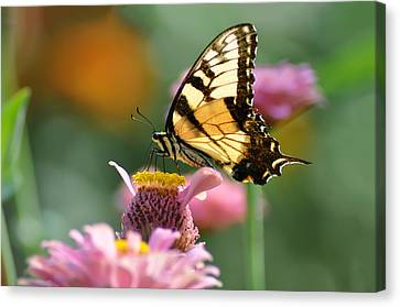 Delicate Wings Canvas Print