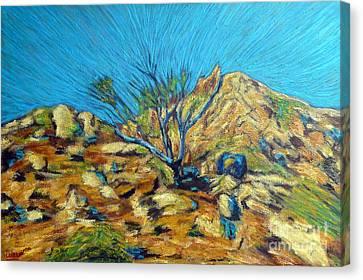 Desert Tree In Blazing Sun Canvas Print by Gerhardt Isringhaus