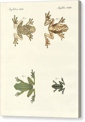 Different Kinds Of Foreign Tree Frogs Canvas Print