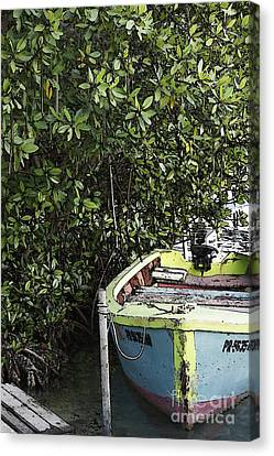 Canvas Print featuring the photograph Docked By The Mangrove Trees by Lilliana Mendez