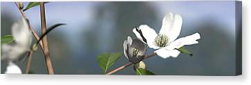 Macros Canvas Print - Dogwood by Cynthia Decker