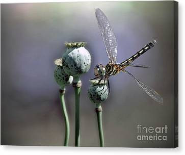 Canvas Print featuring the photograph Dragonfly by Savannah Gibbs