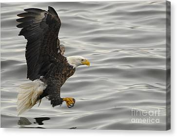 Eagle Canvas Print by Robert Smice
