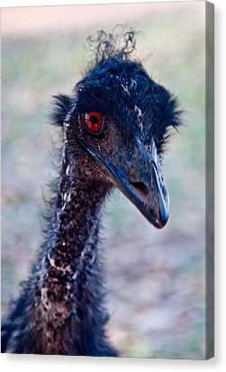 Emu Canvas Print by Carole Hinding