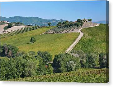 Europe, Italy, Umbria, Near Montefalco Canvas Print by Rob Tilley