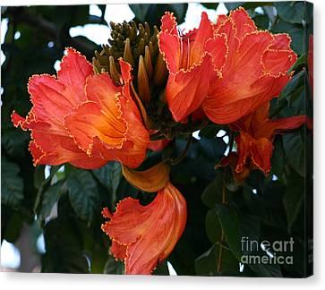 Exotic Flowers Canvas Print by Susanne Baumann