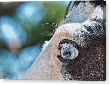 Eye Of The Beholder Canvas Print by Frank Feliciano