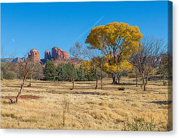 Fall Field On Cathedral Rock Canvas Print by Scott Campbell