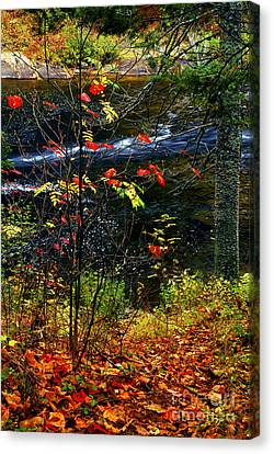 Maple Season Canvas Print - Fall Forest And River by Elena Elisseeva