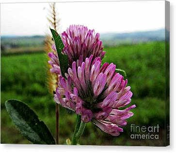 Fantastic Flower Canvas Print by Olivia Narius