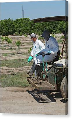Farm Workers Applying Pesticide Canvas Print