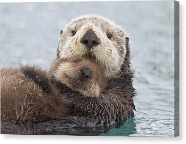 Caring Mother Canvas Print - Female Sea Otter Holding Newborn Pup by Milo Burcham