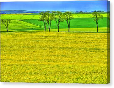 Fields Of Dreams Canvas Print by Midori Chan