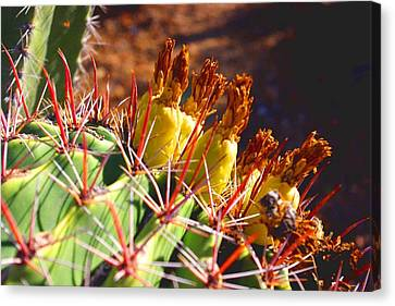 Canvas Print featuring the photograph Fishhook Cactus by David Rizzo
