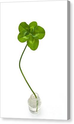 Five-leaf Clover Canvas Print by David Nunuk
