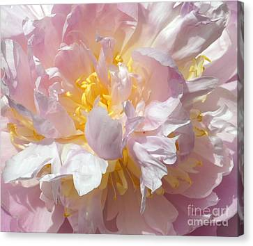 Canvas Print featuring the photograph Flirtatious Pink by Lilliana Mendez