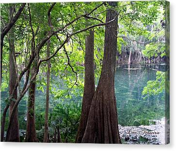 Florida Springs Canvas Print