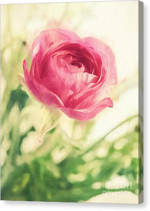 Cardboard Canvas Print - Flower by HD Connelly