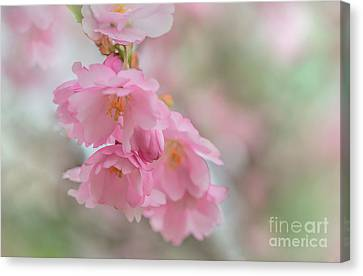 Flower Canvas Print by Sylvia  Niklasson