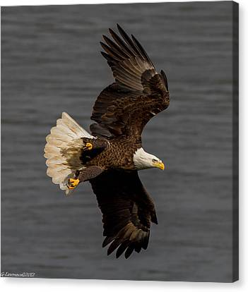 Fly By  Canvas Print by Glenn Lawrence