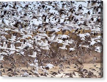 Flying Geese Canvas Print by Jean Noren