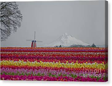For The Beauty Of The Earth Canvas Print by Nick  Boren