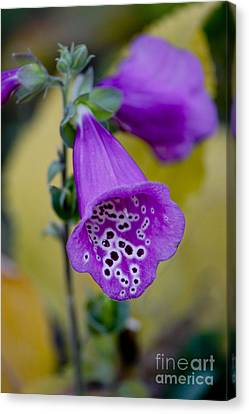 Foxglove Canvas Print by Ivete Basso Photography
