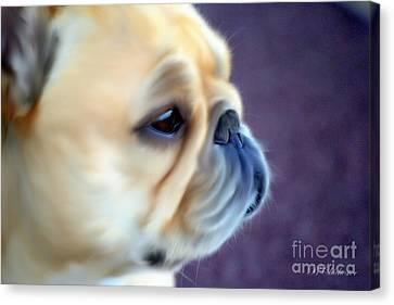 French Bulldog Head Study Canvas Print by Barbara Chichester