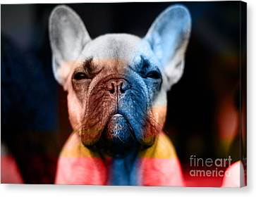 French Bulldog  Canvas Print by Marvin Blaine