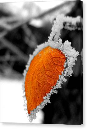 Frosty Canvas Print by Chad Rice