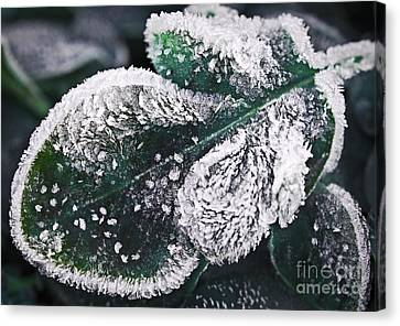 Frosty Leaf Canvas Print by Elena Elisseeva
