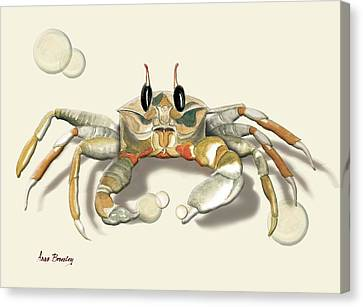 Ghost Crab Canvas Print by Anne Beverley-Stamps