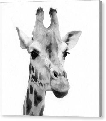 Giraffe On White Background  Canvas Print