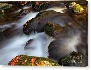 Glistening Rocks Canvas Print by Deborah Scannell