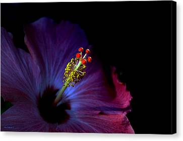 Glow Canvas Print by Steve Godleski
