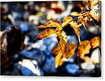 Canvas Print featuring the photograph Golden Leaves by Lawrence Burry