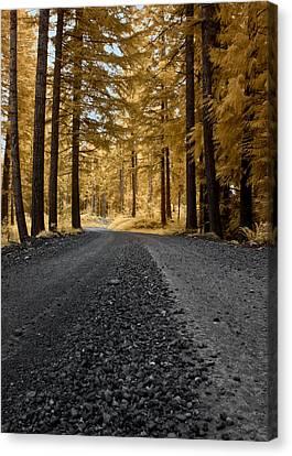 Golden Pines Canvas Print
