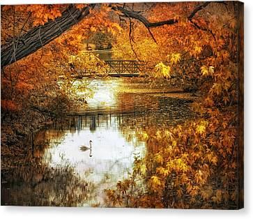 Swans... Canvas Print - Golden Pond by Jessica Jenney
