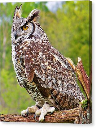 Great Horned Owl Canvas Print by Al Fritz