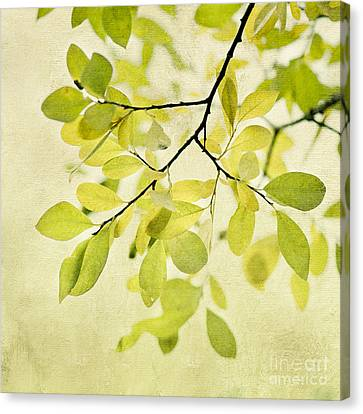 Green Foliage Series Canvas Print by Priska Wettstein