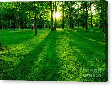 Green Park Canvas Print by Elena Elisseeva