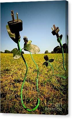 Growing Green Energy Canvas Print by Amy Cicconi
