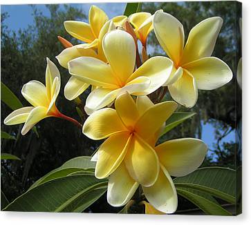 Hawaiian Flowers Canvas Print