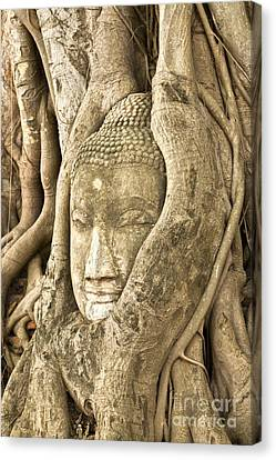 Head Of Buddha Ayutthaya Thailand Canvas Print