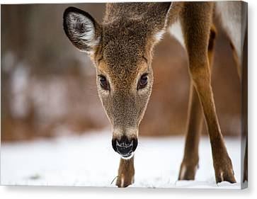 Heres Looking At You Canvas Print