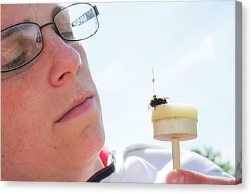 Honeybee Radar Tagging Canvas Print